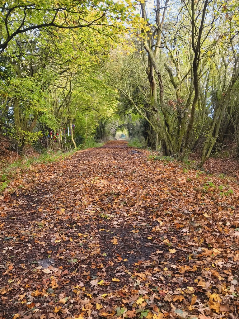 Day 5 - Autumn Walk by backspin71