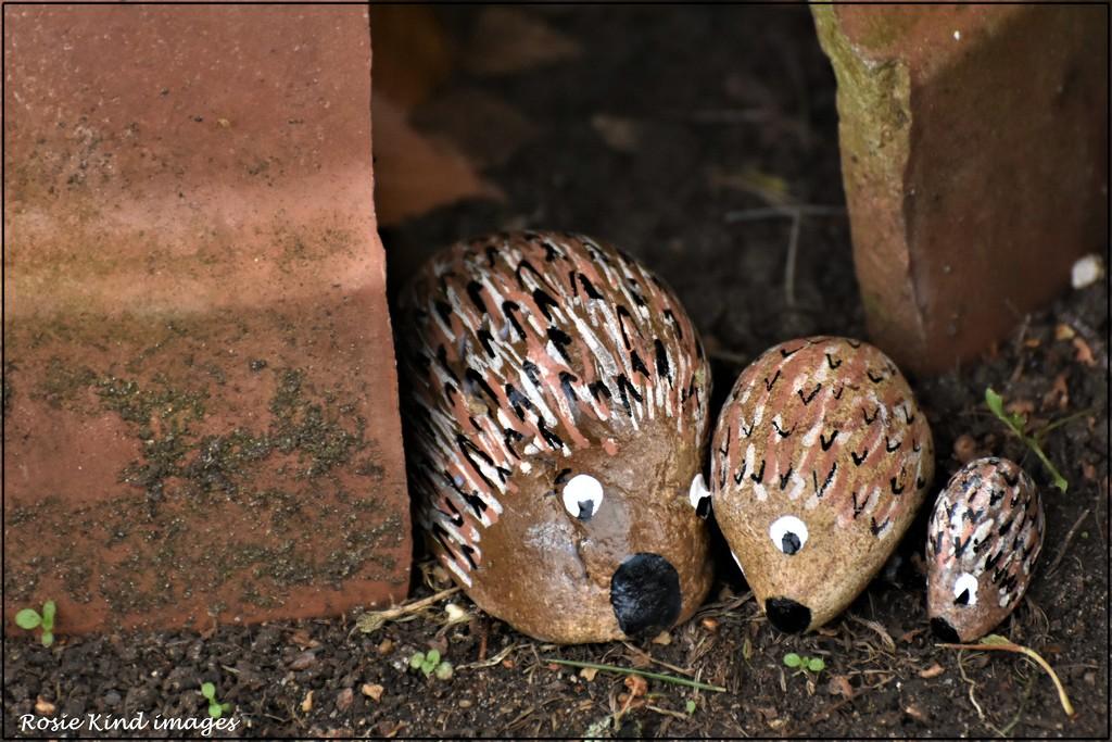 The hedgehogs by rosiekind