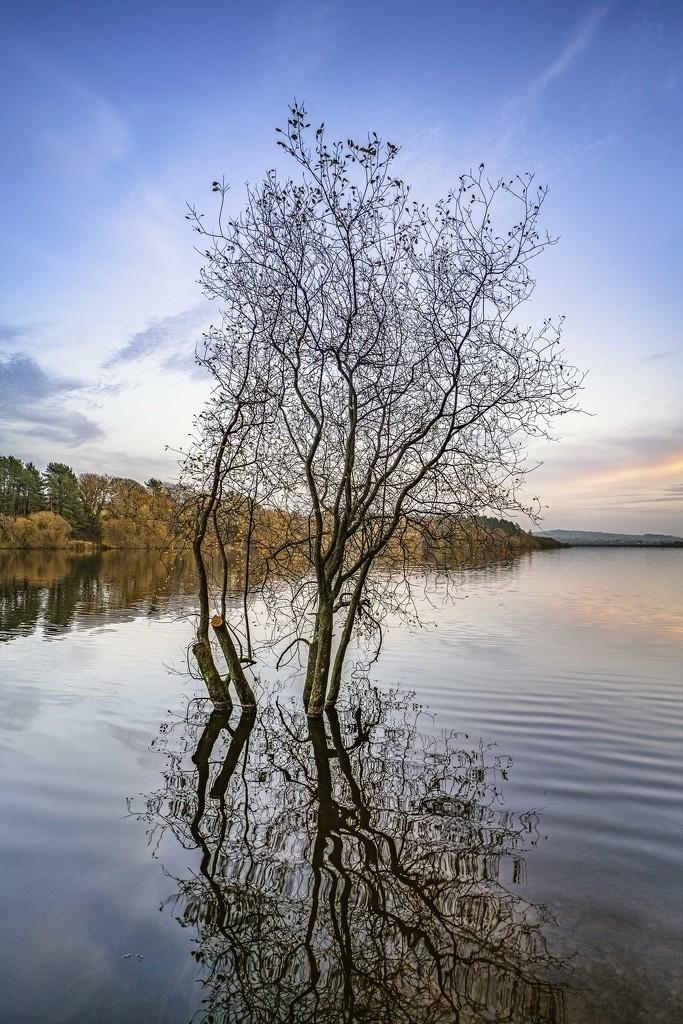 Wayoh Reservoir by gamelee