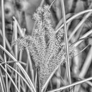 6th Nov 2020 - grass seed head