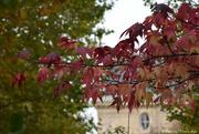 7th Nov 2020 - autumn in Paris