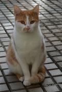 8th Nov 2020 - Unknown cat