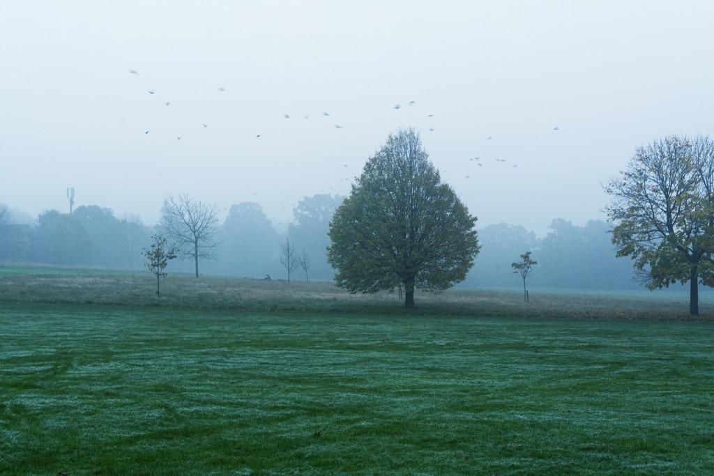 Frost and fog by rumpelstiltskin