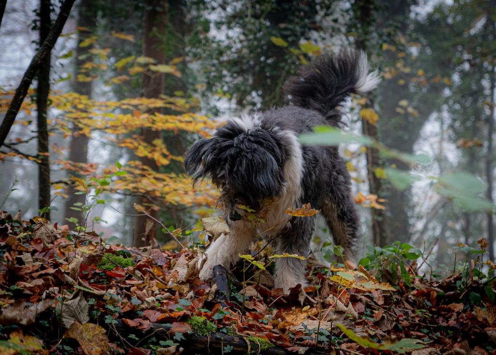 Autumn Shenanigans by pasttheirprime