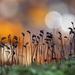 Fairy land by fayefaye
