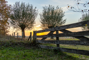 7th Nov 2020 - Fence at sunset