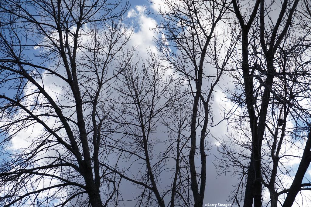 Stark contrast leafless tree by larrysphotos
