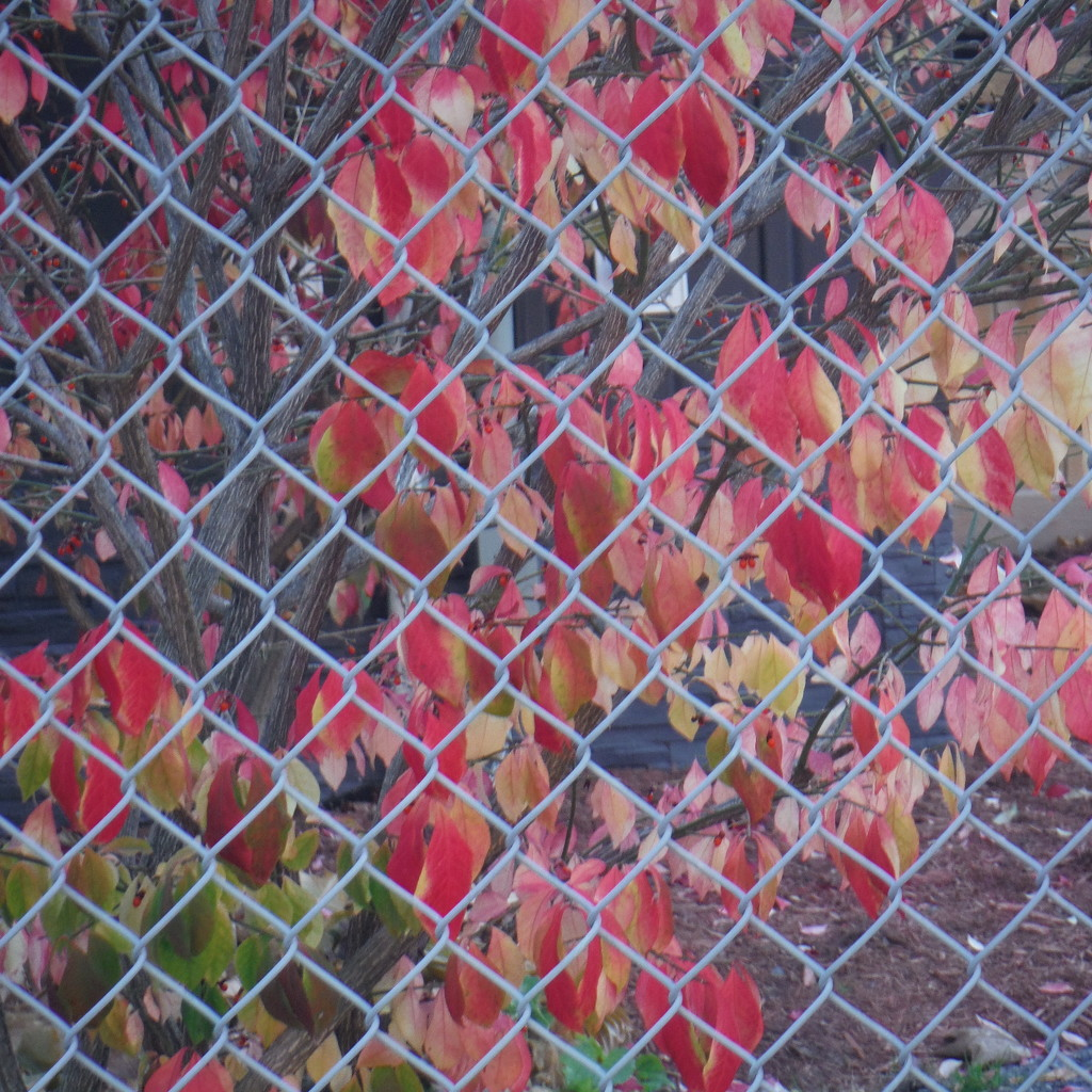 Tags: Fence, Nature by spanishliz