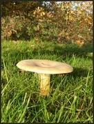 7th Nov 2020 - Big mushroom