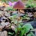 Tiny mushroom  by ilovelenses