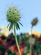 8th Nov 2020 - The enthusiasm of plant life