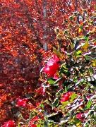 3rd Nov 2020 - Fall Colors