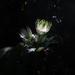 Under the spotlight by kali66