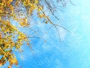7th Nov 2020 - Looking Up