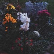 9th Nov 2020 - Garden with flowers in autumn