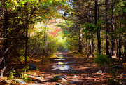 23rd Oct 2020 - Papermill lake trail