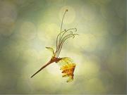 7th Nov 2020 - Pressed Honeysuckle Flower