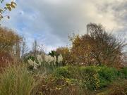 9th Nov 2020 - Over the garden hedge.....