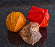 9th Nov 2020 - Three stages of Chinese Lantern.