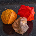 Three stages of Chinese Lantern.