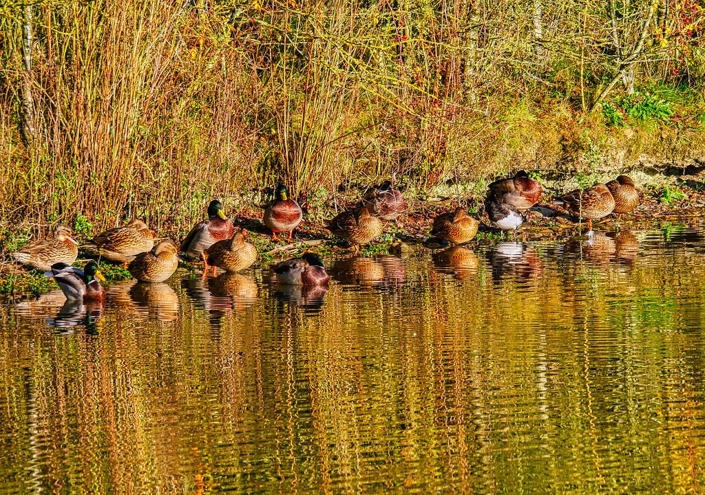 Autumn Colours. by tonygig