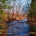 McMichael's Creek by olivetreeann