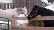 9th Nov 2020 - Both horses enjoying the brisk morning