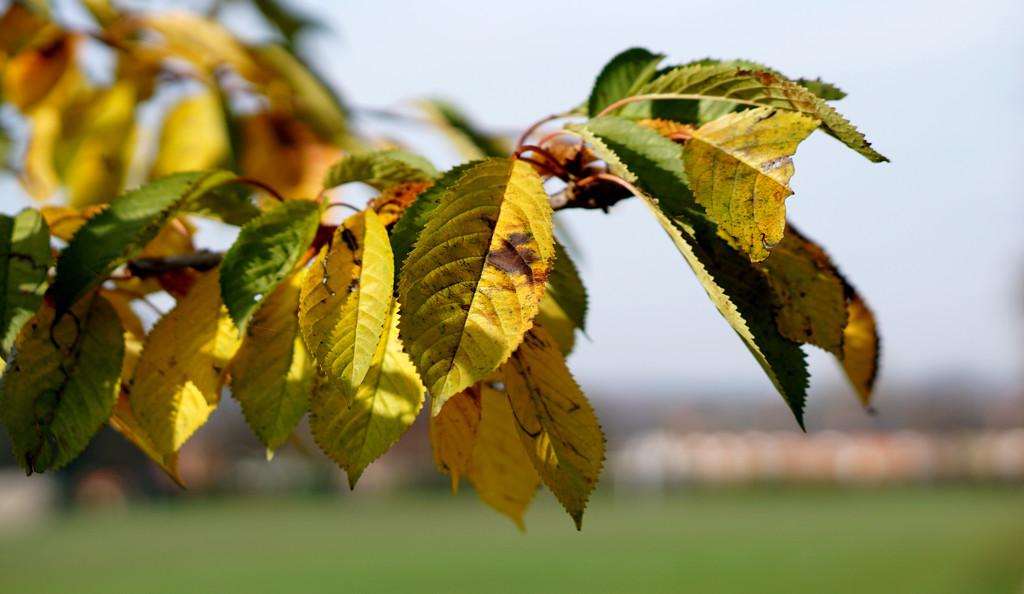 Autumn Bokeh by phil_howcroft