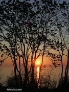 9th Nov 2020 - Sunrise Through the Trees