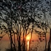 Sunrise Through the Trees by selkie