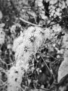 11th Nov 2020 - Winter flowers.