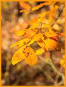9th Nov 2020 - Yellow