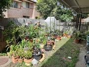 10th Nov 2020 - Springtime in Australia