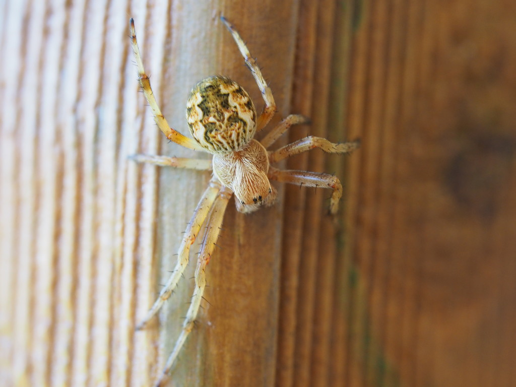 Incy wincy spider by katford