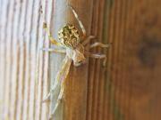 10th Nov 2020 - Incy wincy spider