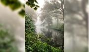 10th Nov 2020 - Fog