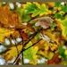 Autumn Leaves And Bokeh