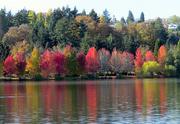 10th Nov 2020 - Across The Lake