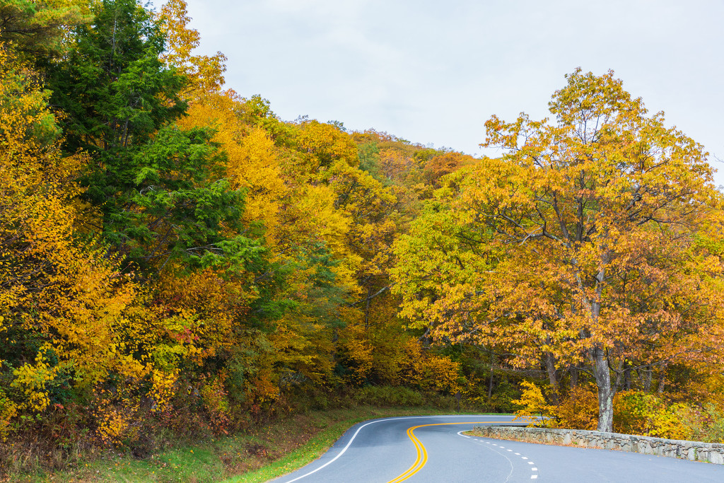 Shenandoah Roadway by photograndma