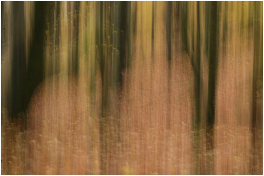 Autumn ICM  by lyndamcg