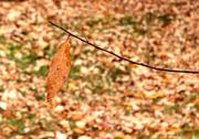 10th Nov 2020 - Number One Leaf