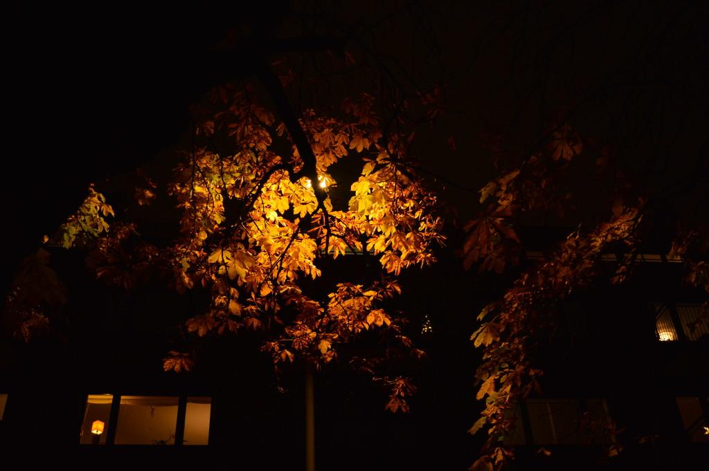 City lights by didi