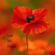 11th Nov 2020 - Lest We Forget
