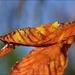 Capture the Autumn Sun by olivetreeann