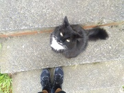 11th Nov 2020 - My lunch time cat