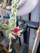 11th Nov 2020 - Tiny Flower,  Tiny Pot