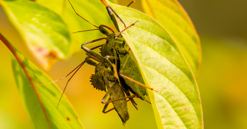 Megasaurus Bugs! by rickster549
