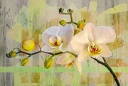 11th Nov 2020 - Orchids and pastels