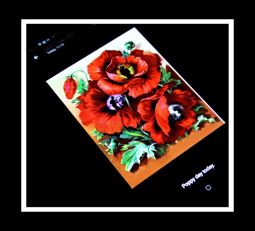 Remembrance/Poppy day  by sdutoit