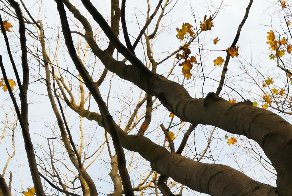 treetops by marijbar